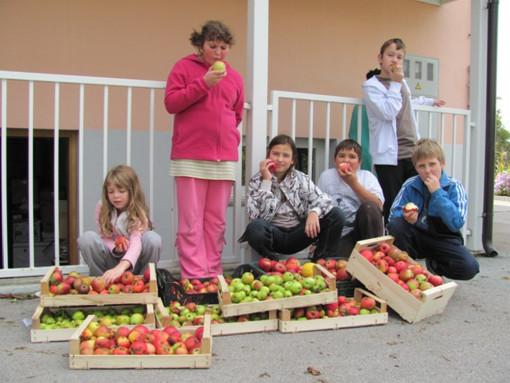 okusanje sadja